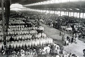 marché bestiaux