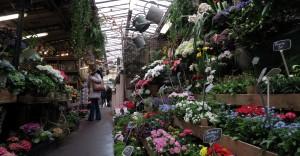 Marché aux fleurs_5886